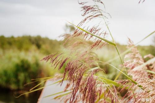 Genieten aan de rand van de Biesbosch