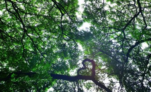 Groots Genieten in het Kleine Groene Hart