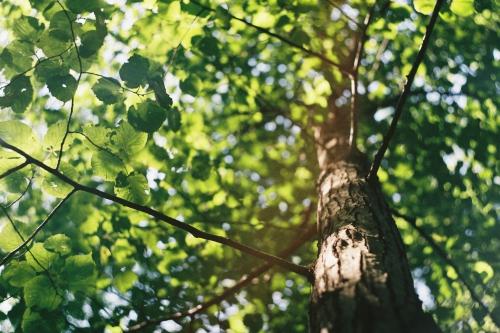 Thema Happen | Genieten in het Groene Woud