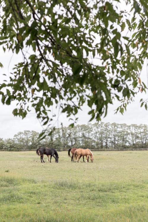 Heerlijck vrij in de Brabantse binnenlanden
