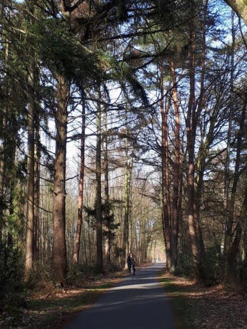 Fietsen door bos en heide in Zutendaal