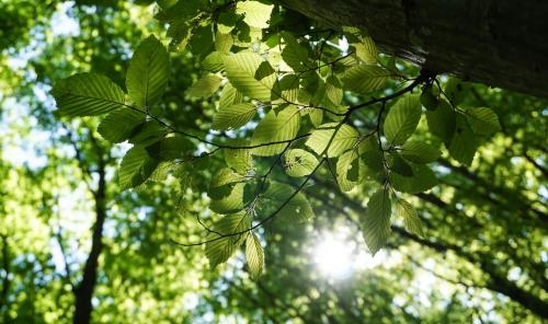 Genieten in de groenste regio