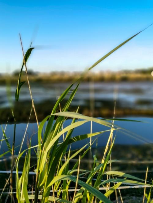 Toeren in het Land van Linge en Waal