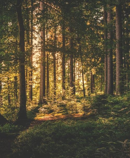 Tilburg en de Chaamse bossen